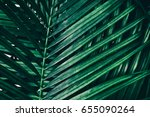 tropical palm foliage  dark... | Shutterstock . vector #655090264
