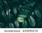 dark green leaf texture... | Shutterstock . vector #655090270