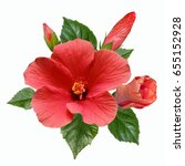 large bright flowers  buds and... | Shutterstock . vector #655152928