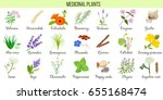 big vector set of medicinal