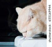 cat drinking from pet water...   Shutterstock . vector #655169944