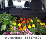 Flowers In The Car. The Trunk...