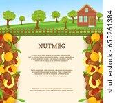 vector illustration of a nutmeg ... | Shutterstock .eps vector #655261384