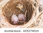 Two Bulbul Eggs In Nest ...