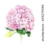 Pink Hydrangea Flower....