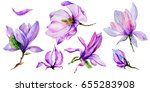 wildflower magnolia flower in a ... | Shutterstock . vector #655283908
