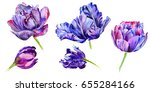 wildflower tulip flower in a... | Shutterstock . vector #655284166