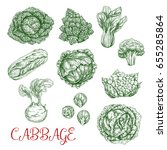 cabbage vegetables vector... | Shutterstock .eps vector #655285864