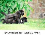 Stock photo labrador puppy 655327954