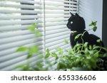 Stock photo black cat looking through venetian blinds 655336606