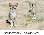Stock photo two curious kittens that are brothers 655368694