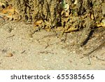 lizard basking in the rays of... | Shutterstock . vector #655385656
