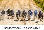 greyhounds racing against each... | Shutterstock . vector #655459360