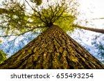 huge beautiful tree in a valley ... | Shutterstock . vector #655493254