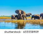 herd of elephants adults and... | Shutterstock . vector #655558909
