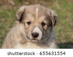 Stock photo a portrait of cute puppy on background of grass 655631554