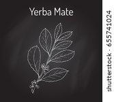 yerba mate  ilex paraguariensis ... | Shutterstock .eps vector #655741024