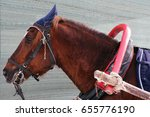 Horse Working In A Yoke  The...