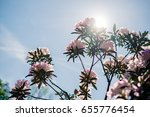 macro view of colorful... | Shutterstock . vector #655776454