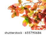 colorful leaves on white... | Shutterstock . vector #655790686