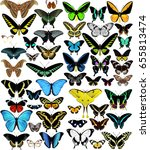 Big Vector Set Of Butterflies...