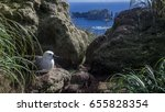 Small photo of Juvenile Albatross Prepares for First Flight and to Take to the Ocean