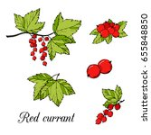 red currant colored vector set. | Shutterstock .eps vector #655848850