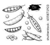 pea hand drawn illustration set.... | Shutterstock . vector #655871923