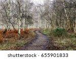 winter silver birch in wareham  ... | Shutterstock . vector #655901833