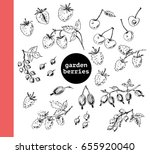 hand drawn ink sketch of garden ... | Shutterstock .eps vector #655920040