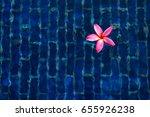 pink plumeria flower or... | Shutterstock . vector #655926238