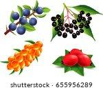 group of sea buckthorn  rose... | Shutterstock .eps vector #655956289