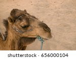 Small photo of Head of a camel close-up on the sand of the desert in African country.