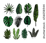 tropical leaves collection.... | Shutterstock .eps vector #656058544