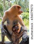 proboscis monkey with baby...   Shutterstock . vector #656079073