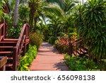 a red boardwalk pathway through ... | Shutterstock . vector #656098138