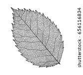leaves rose  isolated on white. ...   Shutterstock .eps vector #656116834