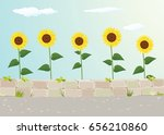 sunflower view near roadside    Shutterstock .eps vector #656210860
