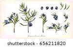 juniper branch and evergreen... | Shutterstock .eps vector #656211820