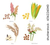 four cereals in form of grains... | Shutterstock .eps vector #656226040
