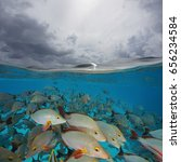 over and under sea surface  a... | Shutterstock . vector #656234584