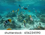tropical fishes underwater in a ... | Shutterstock . vector #656234590