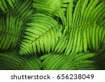 Perfect Natural Fern Pattern....