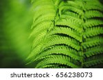 Beautiful Fern Leaves Green...