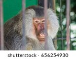 baboon looking through the bars ...   Shutterstock . vector #656254930
