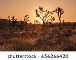 Joshua Tree National Park ...