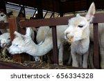 alpaca | Shutterstock . vector #656334328