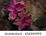 flowers in the garden.image of... | Shutterstock . vector #656344393