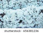 flower bouquets white. | Shutterstock . vector #656381236