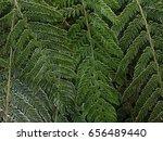 fern    | Shutterstock . vector #656489440